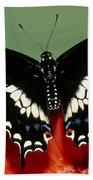 Eastern Black Swallowtail Butterfly Beach Towel
