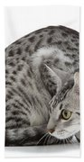 Egyptian Mau Cat Beach Towel