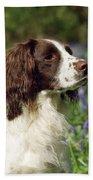English Springer Spaniel Dog Beach Towel