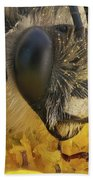 Eucera Longicornis Portrait 4.5x Beach Towel