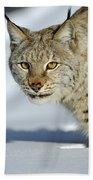 Eurasian Lynx In Snow Beach Towel