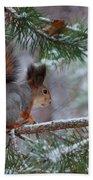 Eurasian Red Squirrel Beach Towel