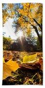 Fall Autumn Park. Falling Leaves Beach Towel