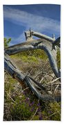Fallen Dead Torrey Pine Trunk At Torrey Pines State Natural Reserve Beach Towel