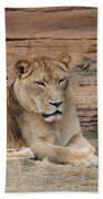 Female African Lion Beach Towel