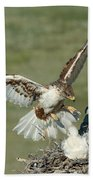 Ferruginous Hawk And Chicks Beach Towel