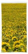 Field Of Blooming Yellow Sunflowers To Horizon Beach Towel