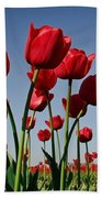 Field Of Red Tulips Beach Towel