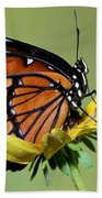 Florida Viceroy Beach Towel