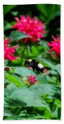Flying Bee With Bee Balm Flowers Beach Towel