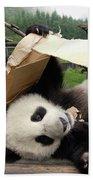 Giant Panda Ailuropoda Melanoleuca Pair Beach Towel