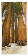 Giant Sequoias Sequoia N P Beach Towel by Yva Momatiuk John Eastcott