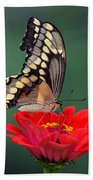 Giant Swallowtail Beach Towel