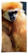 Gibbon Monkey  Beach Towel
