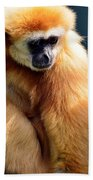 Gibbon Monkey  Beach Sheet