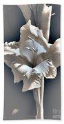 Gladiolus Named Nova Lux Beach Sheet