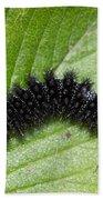 Glanville Fritillary Butterfly Caterpillar - Melitaea Cinxia Beach Towel