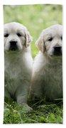 Golden Retriever Puppies Beach Towel