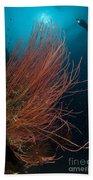 Grand Sea Whip With Diver Beach Sheet