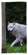 Gray Wolf White Morph Beach Towel