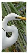 Great Egret Close Up Beach Towel