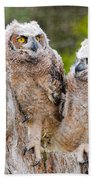 Great Horned Owlets Beach Towel