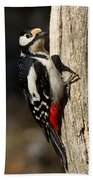 Great Spotted Woodpecker  Beach Towel