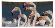 Greater Flamingos, France Beach Towel
