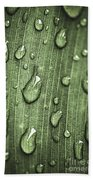 Green Leaf Abstract With Raindrops Beach Towel by Elena Elisseeva