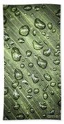Green Leaf With Raindrops Beach Towel