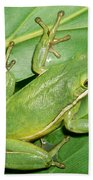 Green Tree Frog Beach Towel