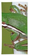 Green Treefrog Beach Towel
