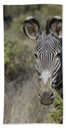 Grevys Zebra Stallion Beach Towel
