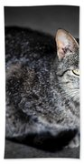 Grey Cat Portrait Beach Towel