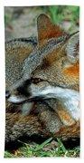 Grey Fox Beach Towel