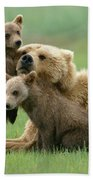 Grizzly Cubs Play With Mom Beach Sheet
