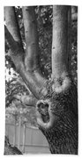 Growth On The Survivor Tree In Black And White Beach Towel