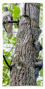 Hawk Hunting For A Squirrel On An Oak Tree Beach Towel