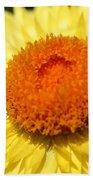 Helichrysum Bracteatum Named Strawburst Yellow Beach Towel