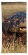 Hippo Cow And Calf Beach Towel