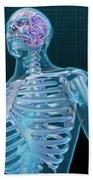 Human Skeleton And Brain, Artwork Beach Towel