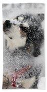Husky Dogs Pull A Sledge  Beach Towel