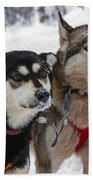 Husky Dogs Pull A Sledge  Beach Towel by Lilach Weiss