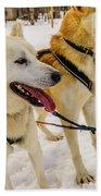 Husky Sled Dogs, Lapland, Finland Beach Sheet
