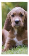 Irish Setter Puppy Beach Towel