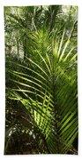 Jungle Ferns Beach Towel