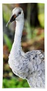Juvenile Sandhill Crane Grus Canadensis Pratensis II Usa Beach Towel
