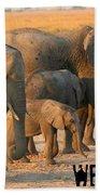 Kalahari Elephants Beach Towel