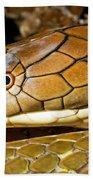 King Cobra Beach Towel