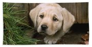 Labrador Puppy Beach Towel